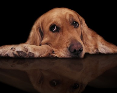 Sad_dog_photo